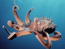 Ученые подсчитали, сколько у осьминога рук и ног