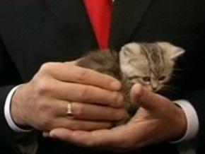 СМИ: Котенок, которого подарили Ющенко, оказался болен