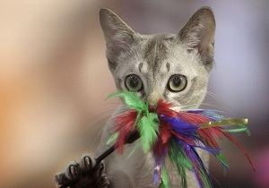 Сегодня в Японии празднуют День кошек
