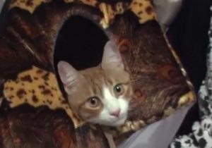 Потерявшийся в Луганской области кот через пять недель вернулся домой в Ростов-на-Дону