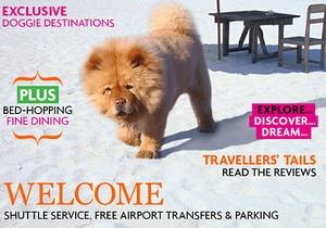 Новости Великобритании - новости о животных: В Великобритании можно приобрести туристическую путевку для собак за $74 тысячи