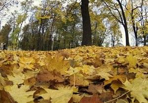 В этом году в Киеве высадят 12 тысяч кленов