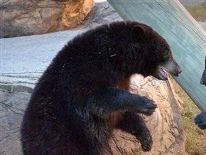В Бишкеке во время циркового выступления медведь задрал двух человек (обновлено)