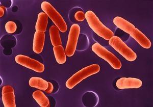 Опасную бактерию E.coli обнаружили в чешских магазинах