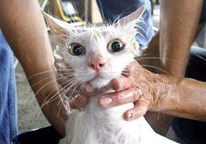 Британца посадят в тюрьму из-за видео с кошкой в микроволновой печи