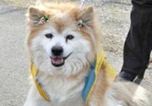 В Японии умерла самая старая в мире собака