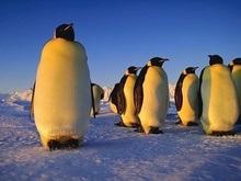 Экологи: Десять видов пингвинов находятся на грани исчезновения