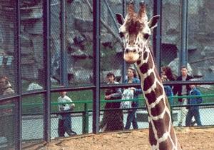 Зоопарк - Москва - В московском зоопарке обрушился помост для кормления жирафов, пострадали более 10 человек