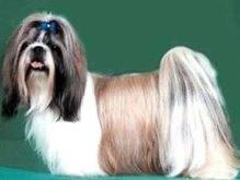 Мэр американского города ушла в отставку из-за собаки
