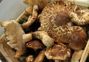 В Измаиле семеро человек отравились грибами