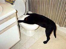 Собаку госпитализировали с тяжелым алкогольным отравлением