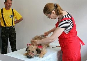 В Киеве для бездомных собак и кошек в Приюте для животных открыли спецбольницу