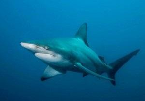 На Сейшелах двое туристов погибли в результате нападения акулы