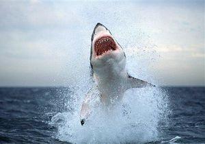 Ученый: Из-за глобального потепления акулы появятся в прибрежных водах Крыма
