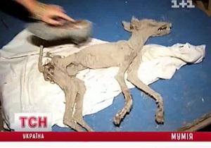 В Киевской области нашли мумию чупакабры