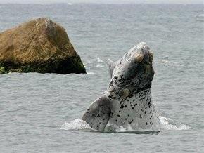 Спасите Вилли: Сегодня отмечают Всемирный день кита