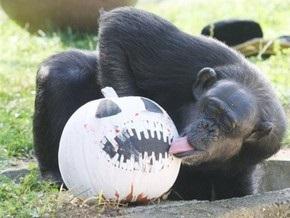 Ученые выяснили, почему шимпанзе не разговаривают