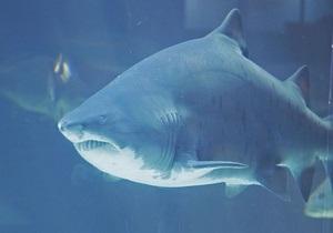 На Гавайях туристка отбилась от акулы благодаря навыкам в тхэквондо