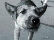 В Мексике открыли памятник бездомной собаке