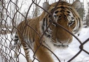 В Одесском зоопарке тигр укусил посетителя