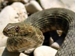 На пляжах ОАЭ появились ядовитые змеи