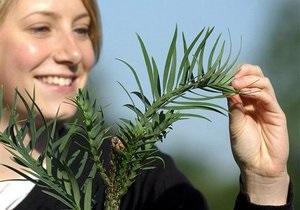 Ученые обнаружили наличие нервной системы у растений