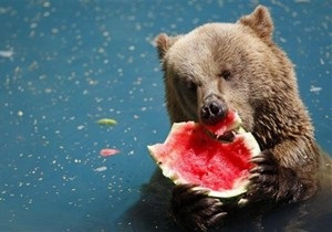 Черкасский зоопарк спасает животных от жары едой, замороженной в глыбах льда