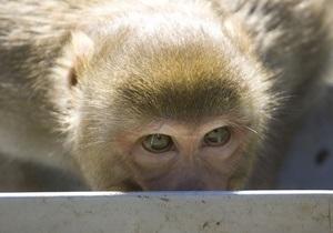 В США поймали находившуюся в бегах четыре года обезьяну