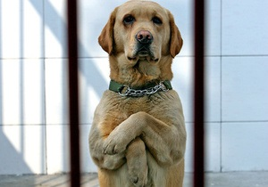 Швейцарцы на референдуме проголосовали против адвокатов для животных