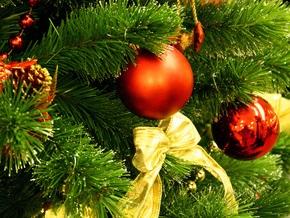 Где в Киеве можно купить живую елку в горшке