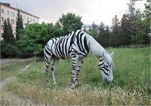 В Крыму местные жители перекрасили лошадь в зебру и катали на ней отдыхающих