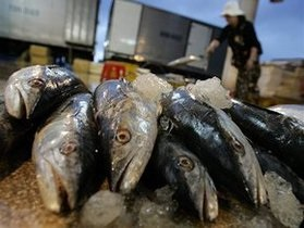 Ученые: чрезмерное употребление красной рыбы может вызвать рак
