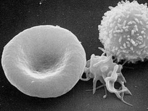 Британия станет производителем искусственной крови из эмбрионов