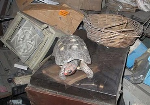 В Бразилии нашли черепаху, 30 лет прожившую в коробке без пищи и воды