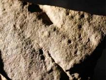 Найдены следы членистоногого возрастом 570 миллионов лет