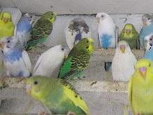 В Беларуси сожгли 270 украинских попугаев