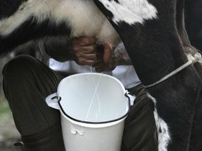 НГ: Минский молокоотвод