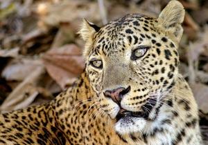 В подмосковном цирке леопард набросился на девочку