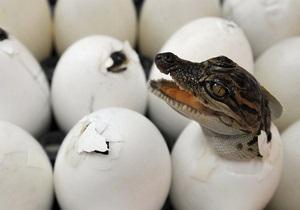 Киевский зоопарк отпразднует День крокодила
