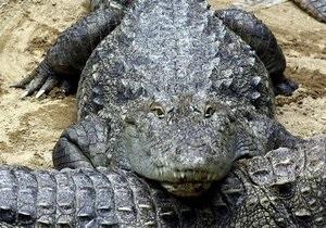 В музее Онтарио обнаружили древнейшего африканского предка крокодила
