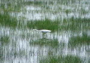 МЧС готовится к прорыву дамбы на Дунае: животные бегут с близлежащих территорий