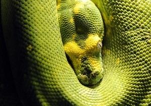 В Ливане обнаружили останки древней змеи с ногами