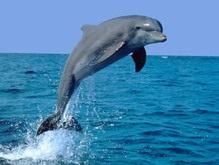 Двое британцев осуждены за приставание к дельфину