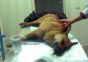 Защитники животных: В Полтаве массово травят бездомных собак