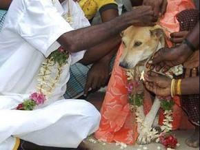 Полугодовалого индуса женили на собаке, чтоб спасти от проклятия