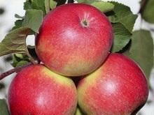 Ученые определили самый полезный фрукт