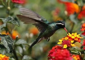 Ученые создали робота-колибри