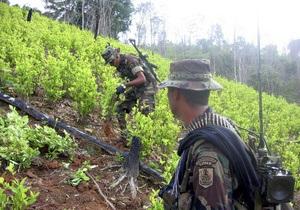 Колумбийские повстанцы требуют легализовать посевы марихуаны, коки и опийного мака