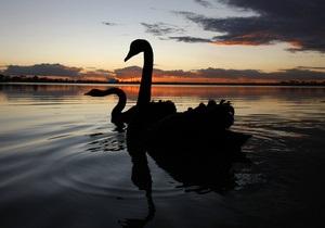 У російському зоопарку вбили рідкісного чорного лебедя