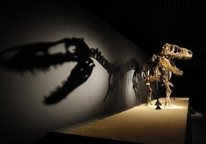 У США палеонтологи знайшли в запасниках музею два нових види динозаврів